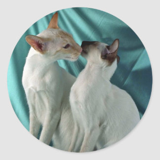 Siamese, red point & seal point classic round sticker