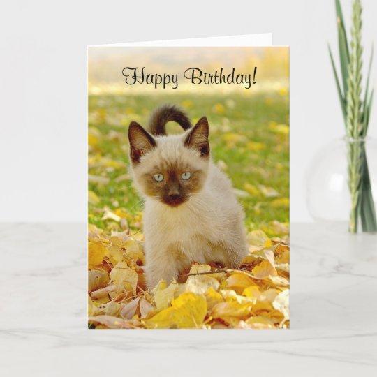Siamese X Kitten Birthday Card Zazzle