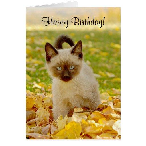 Siamese-X Kitten Birthday Card