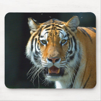 Siberian (Amur) Tiger Mouse Pad