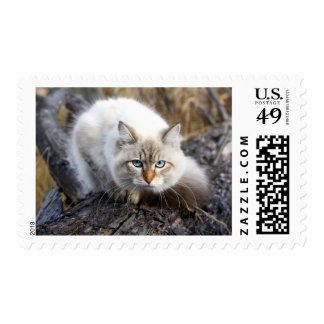 Siberian Cat In A Autumn Forest Postage