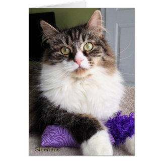 Siberian Cat Note Card