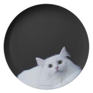 Siberian Cat Dinner Plates