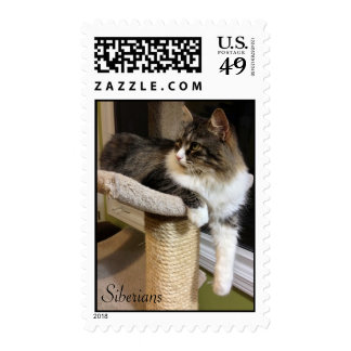 Siberian Cat Postage Stamps