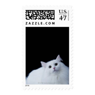 Siberian Cat Stamp