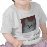 Siberian Colorpoint Kitten on products Tee Shirts