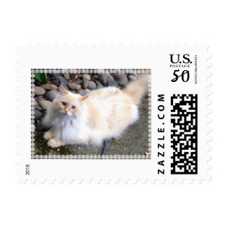 Siberian Forest Cat Postage