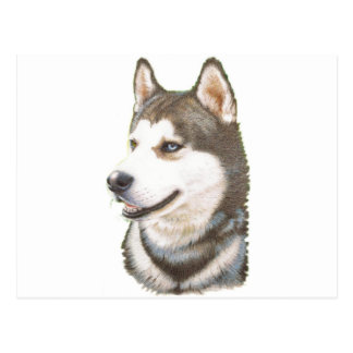 Siberian Huskey Dog Postcard