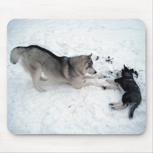 Siberian Huskies - Mousepad