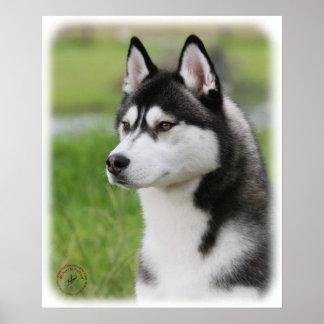 Siberian Husky 9Y570D-006 Posters
