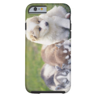 Siberian Husky; A working dog breed that Tough iPhone 6 Case