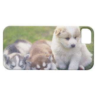 Siberian Husky; A working dog breed that iPhone SE/5/5s Case