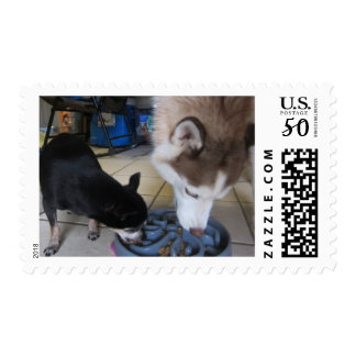 Siberian Husky and Chihuahua eat breakfast Postage