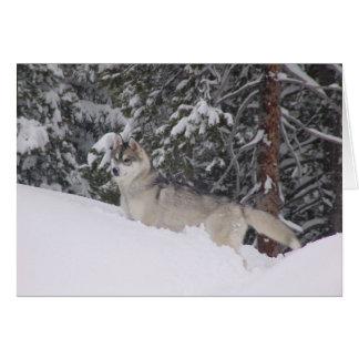 Siberian Husky Blank Notecards Card