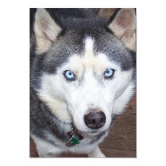 Siberian_Husky_blue-eyed.png Card