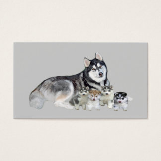 Siberian Husky Breeder Business Card