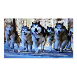 SIBERIAN HUSKY BUS / PERSONAL CARD Double-Sided STANDARD BUSINESS CARDS (Pack OF 100)