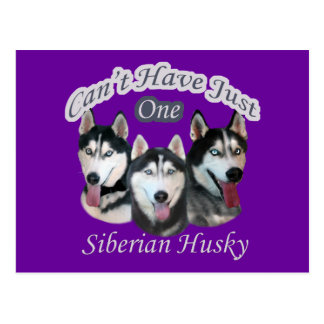 Siberian Husky Can't Have Just One Postcard