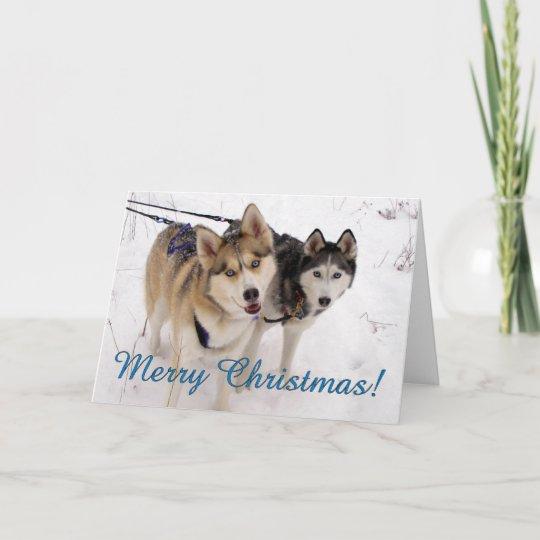 Husky Christmas Cards.Siberian Husky Christmas Card