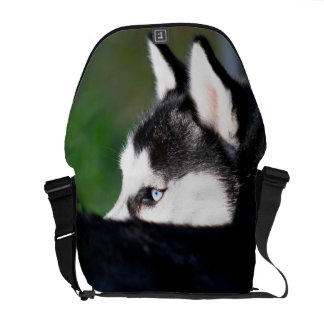 Siberian Husky Courier Bag