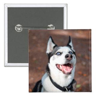 Siberian Husky dog blue eyes Button