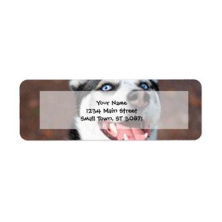 Siberian Husky dog blue eyes Label