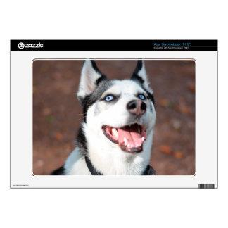 Siberian Husky dog blue eyes Skin For Acer Chromebook