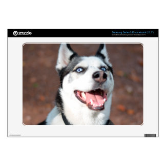 Siberian Husky dog blue eyes Samsung Chromebook Decal