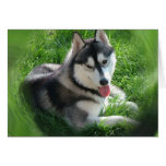 Siberian Husky Dog Greeting Card