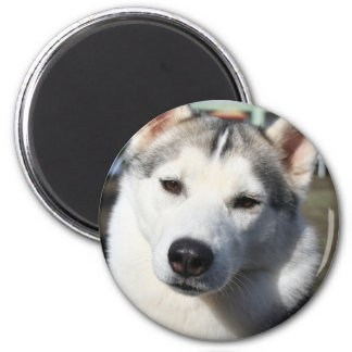 Siberian Husky Dog Magnet Refrigerator Magnet