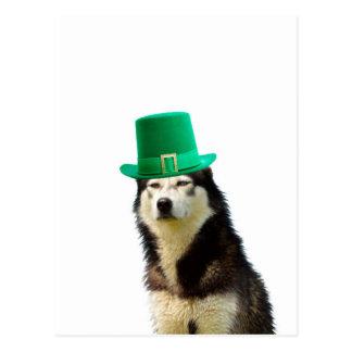 Siberian Husky Dog St. Patrick's day Postcard
