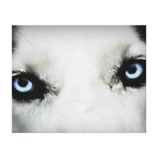 Siberian Husky Eyes Stretched Canvas Prints