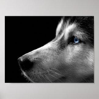 Siberian Husky Face Print