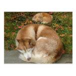 Siberian Husky & German Klein Spitz Pomeranian Post Cards