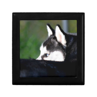 Siberian Husky Gift Box