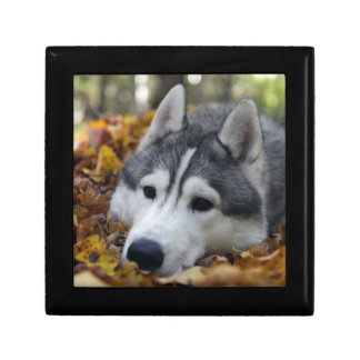 Siberian Husky Trinket Box