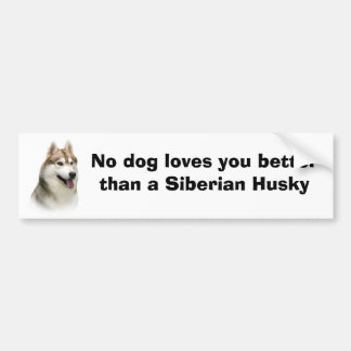 Siberian Husky Gorgeous Bumper Sticker