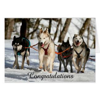 Siberian Husky Graduation Card