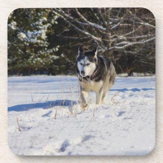 Siberian Husky In The Snow Beverage Coaster