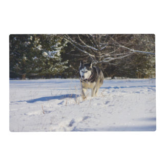 Siberian Husky In The Snow Placemat