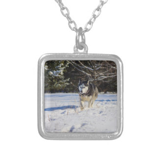 Siberian Husky In The Snow Silver Plated Necklace