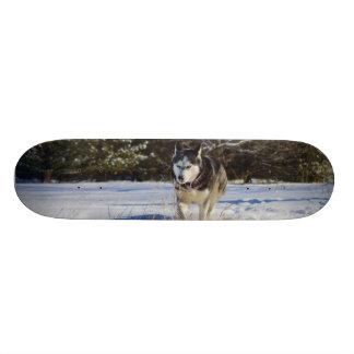 Siberian Husky In The Snow Skateboard