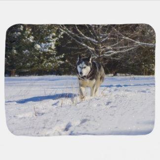 Siberian Husky In The Snow Stroller Blanket