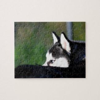 Siberian Husky Jigsaw Puzzle