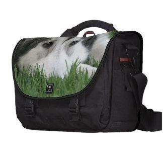 Siberian Husky Bag For Laptop