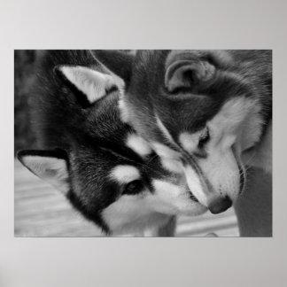 Siberian Husky Love 2 Plakatdruck