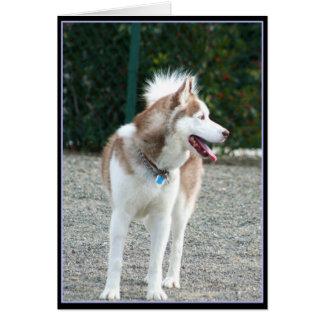 Siberian Husky Notecard