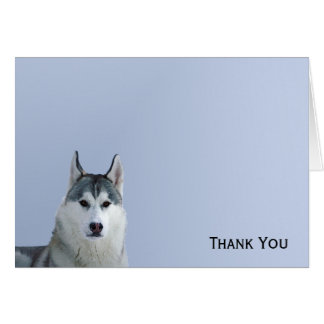 Siberian Husky on Blue Background Card
