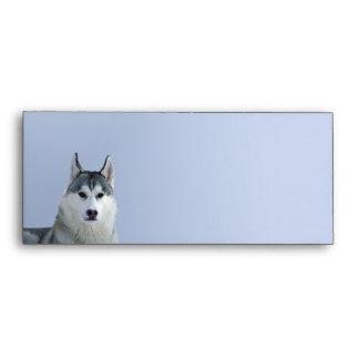 Siberian Husky on Blue Background Envelopes