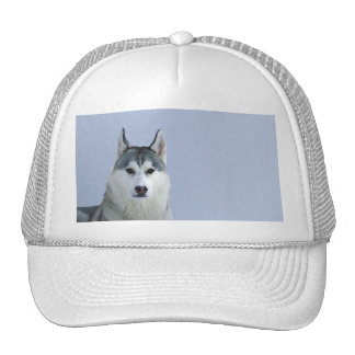 Siberian Husky on Blue Background Mesh Hats